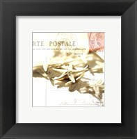 Framed Postal Shells II