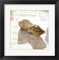 Framed Postal Shells I