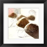 Framed Postal Shells IV