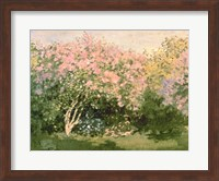 Framed Lilac in the Sun, 1873