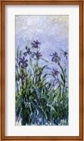 Framed Purple Irises, 1914-17