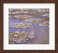 Framed Nympheas, c.1905