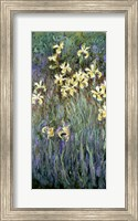 Framed Yellow Irises