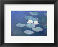 Framed Waterlilies, Evening