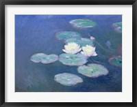 Framed Waterlilies, Evening
