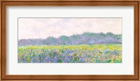 Framed Field of Yellow Irises at Giverny, 1887