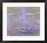 Framed Waterlilies, 1903 (purple)