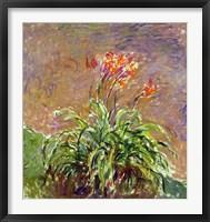 Framed Hemerocallis, 1914-17