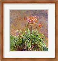 Framed Hemerocallis, 1914-17