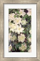 Framed White Clematis, 1887