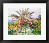 Framed Palm Tree at Bordighera