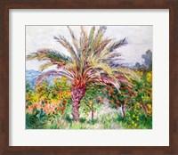 Framed Palm Tree at Bordighera