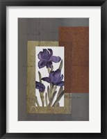 Framed Regal Iris 1