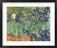 Framed Irises, 1889