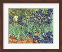 Framed Irises, 1889
