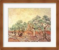 Framed Olive Grove, 1889