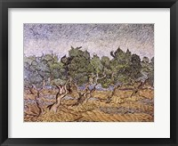 Framed Olive Orchard, Violet Soil
