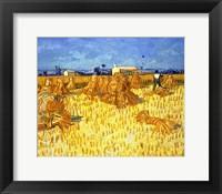 Framed Harvest in Provence