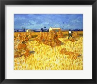 Framed Harvest in Provence