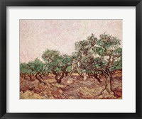 Framed Olive Pickers - picking