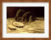 Framed Two Rats