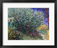 Framed Lilac Bush, 1889