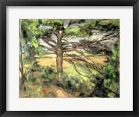 Framed Large Pine, 1895-97