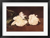 Framed Branch of White Peonies and Secateurs, 1864