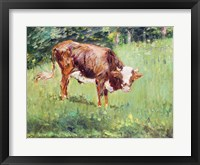 Framed Young Bull in a Meadow, 1881