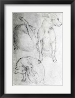 Framed Study of a dog and a cat