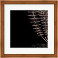 Framed Fern III (on black)