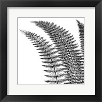 Framed Fern I (on white)