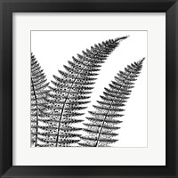 Framed Fern II (on white)