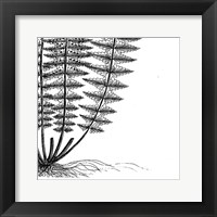 Framed Fern IV (on white)