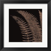Framed Fern I (on black)