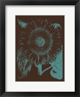 Framed Sunflower 6