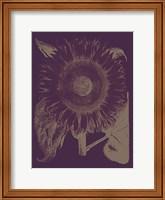 Framed Sunflower 13