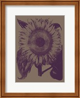 Framed Sunflower 14