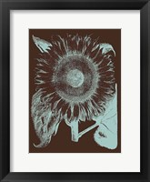 Framed Sunflower 17