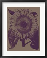 Framed Sunflower 14