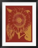 Framed Sunflower 16
