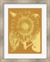 Framed Sunflower 20