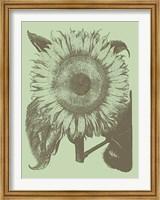 Framed Sunflower 11