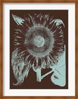 Framed Sunflower 17