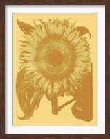 Framed Sunflower 19