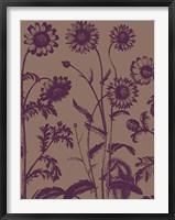 Framed Chrysanthemum 14