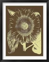 Framed Sunflower 3