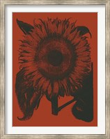 Framed Sunflower 9