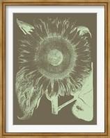 Framed Sunflower 12