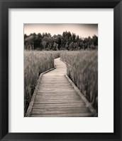 Framed Towards Woods